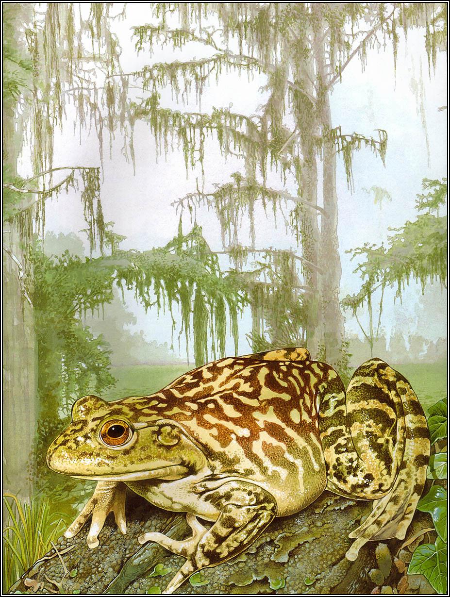 автономное поющая жаба картинки анализам