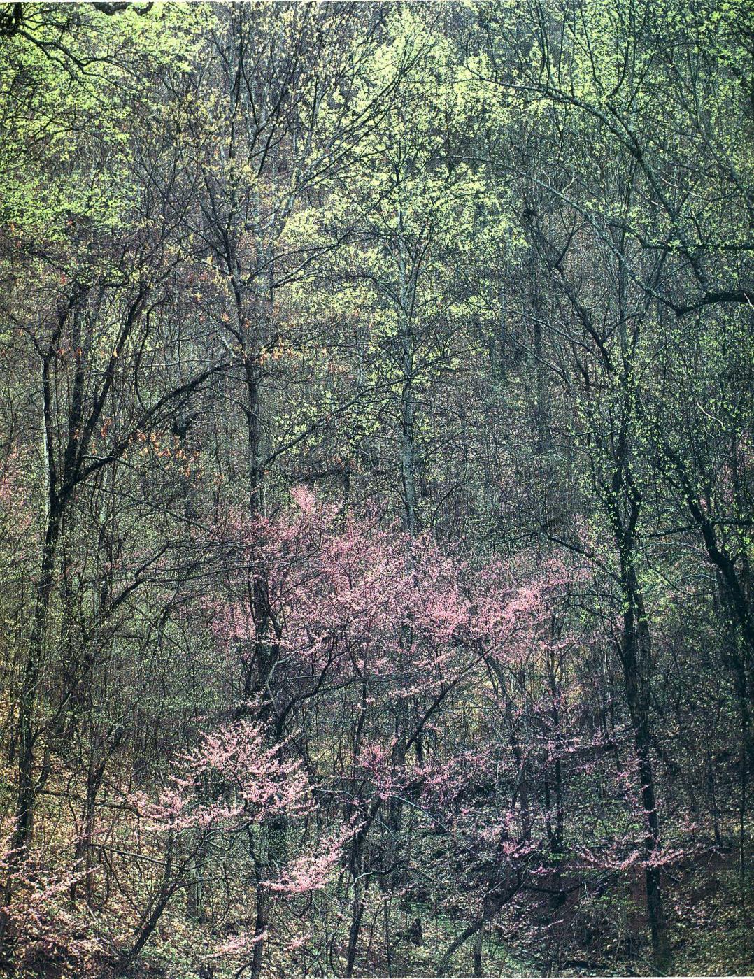 Eliot Porter. Trees