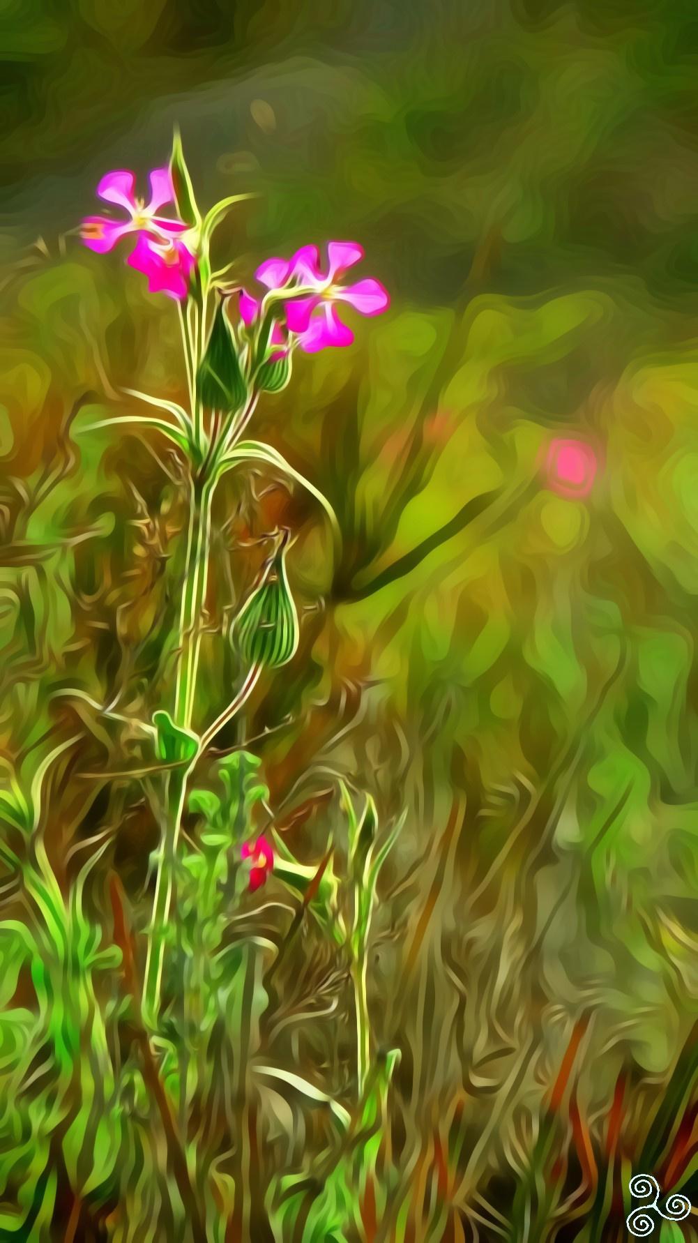 Denis Sergeyevich Ismailov. The flower which lives in the desert