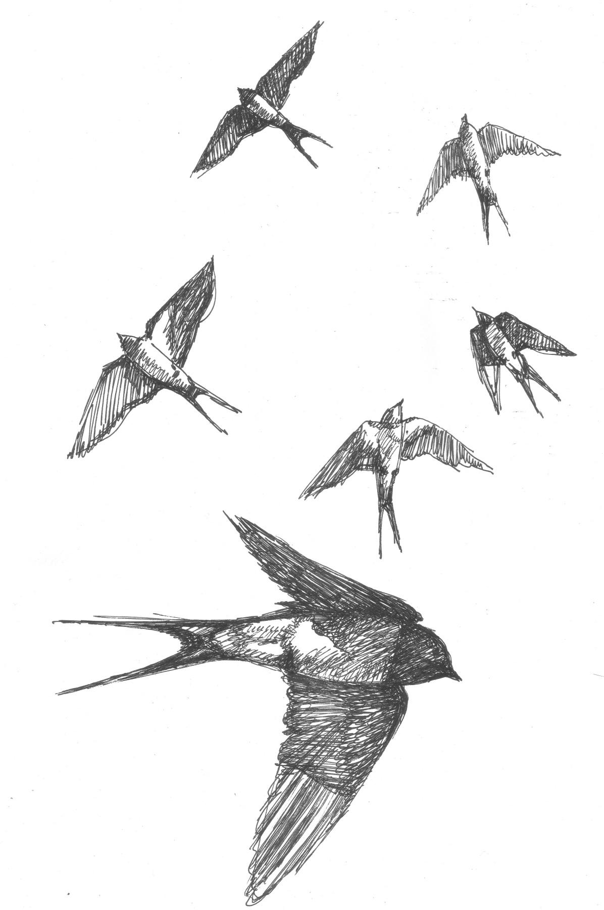 Александр Викторович Беляков. Swallows 2. From the series Birds.