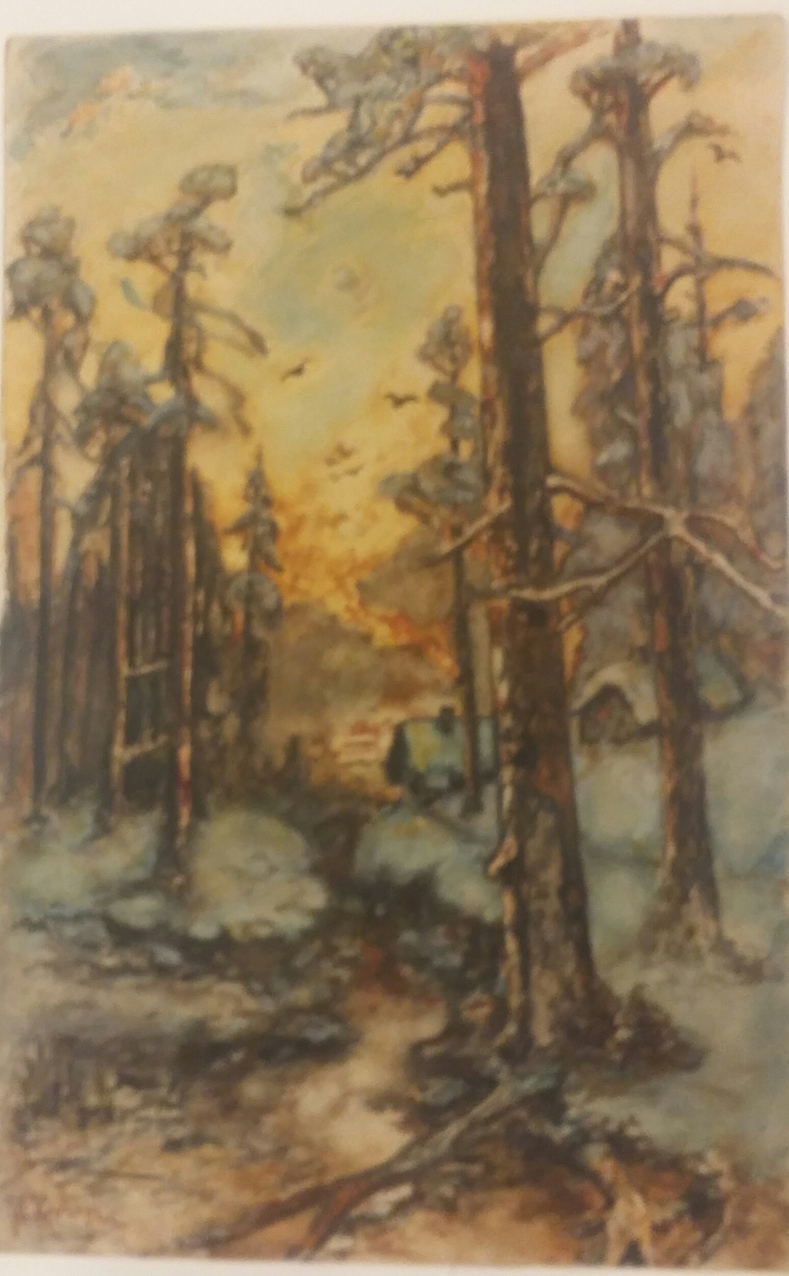 School Clover Yu. Sunset in the forest