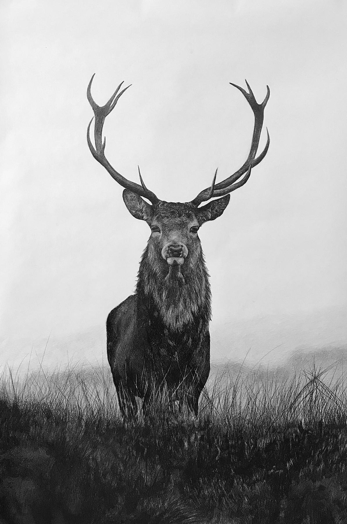 Эдуард Анатольевич Поташев. Лесной олень