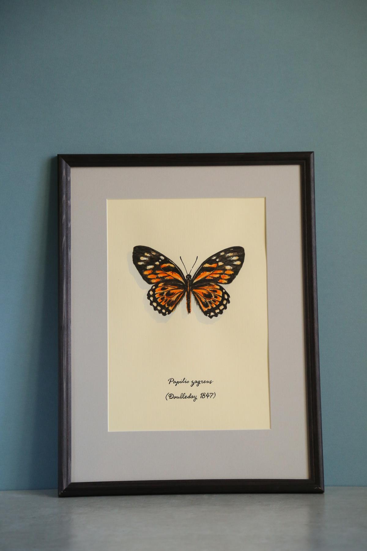 Evgeniya Petrova. Papilio zagreus
