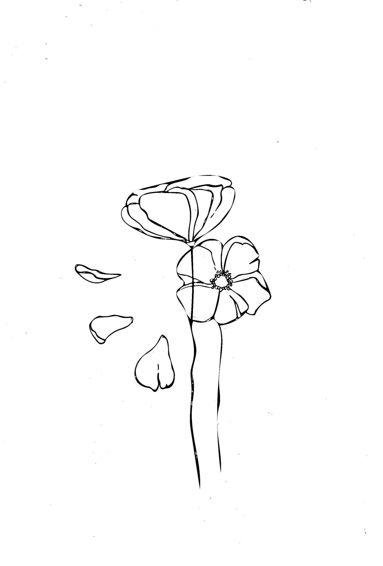 Moiseeva Angelina. Poppies