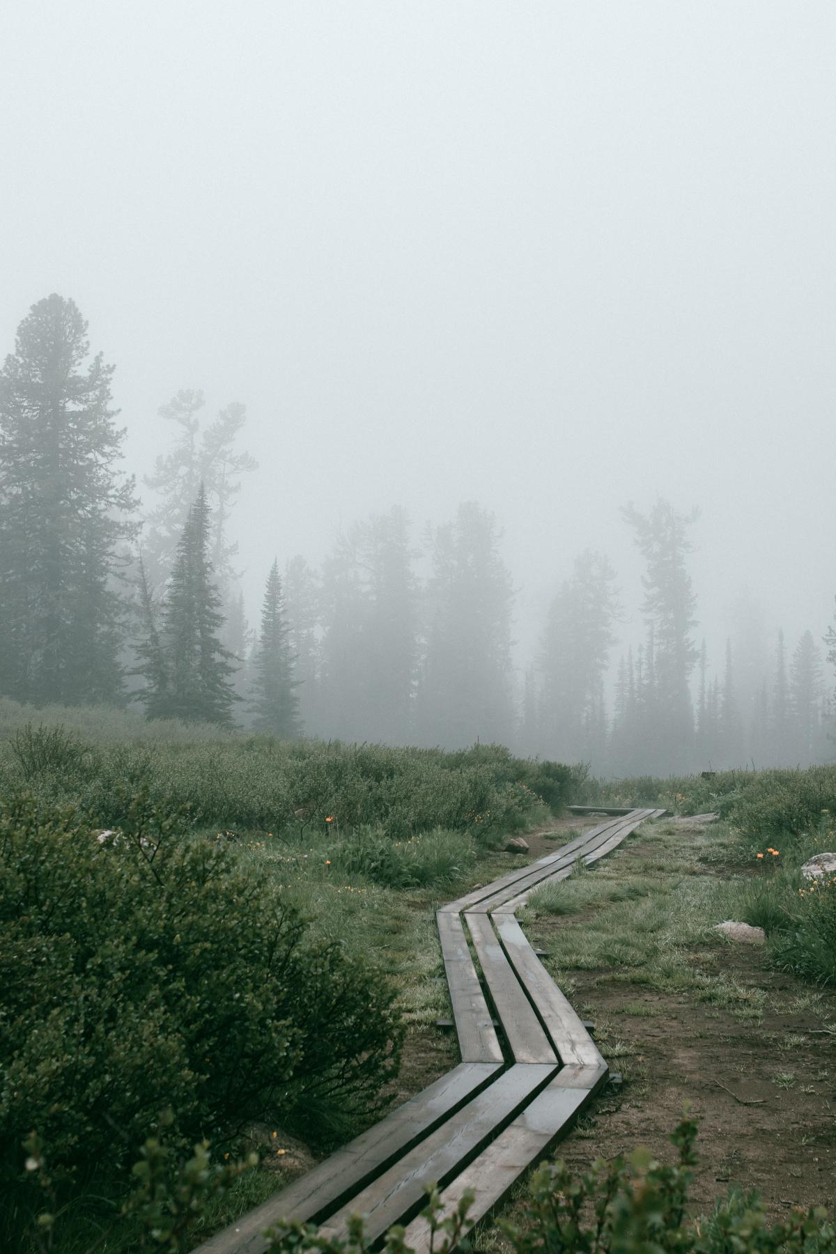 Egor Roseytsev. Foggy morning