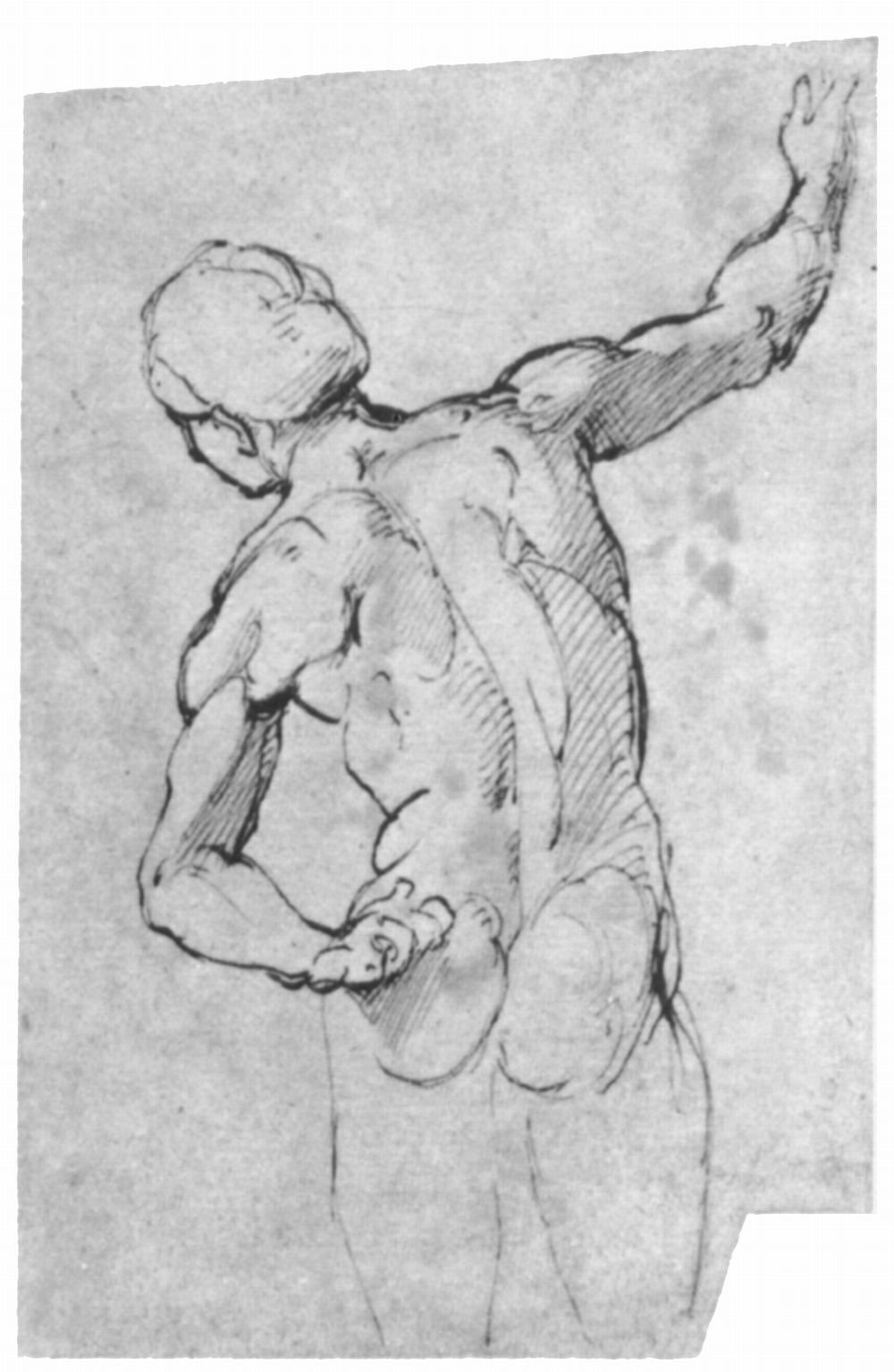 "Raphael Santi. Sketch for the fresco ""Dispute of the Holy sacrament."" Nude from the back"