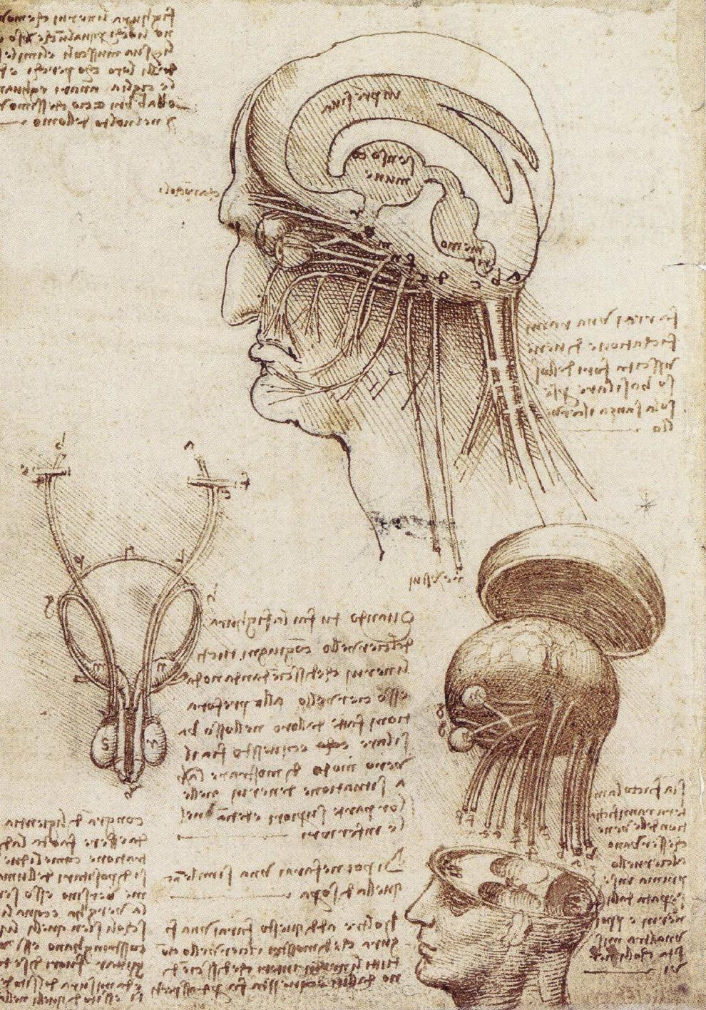 Леонардо да Винчи. Исследование человеческого мозга
