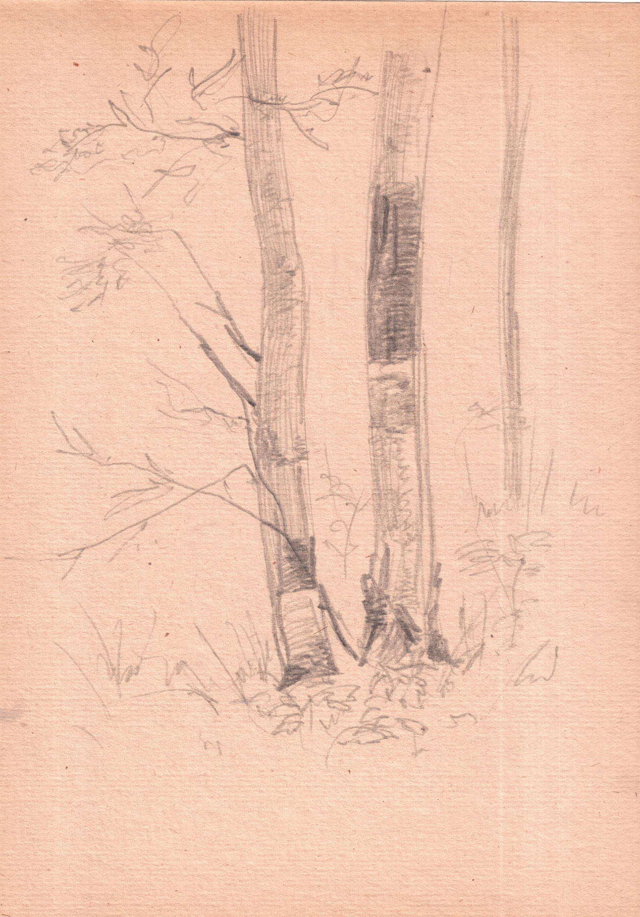 Arkady Pavlovich Laptev. Two birch trees