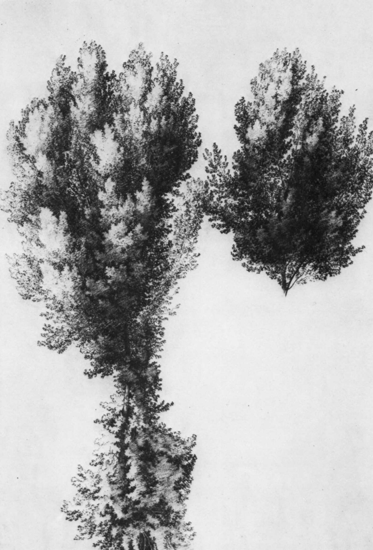 Wilhelm Noak. A large sketch of a tree