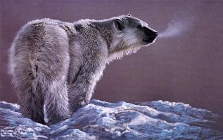 Дуглас Маннинг. Полярный медведь