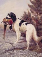 Александр Поп. Охотничья собака с фазаном