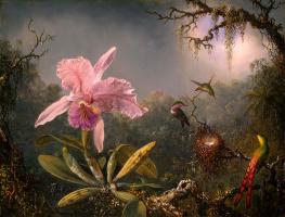 Cattleya's orchid and three hummingbirds