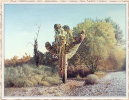 Уэйн Смит. Большой кактус
