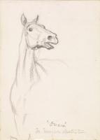 Уильям Холман Хант. Лошадь. Эскиз для «Баллады Орианы» Теннисона