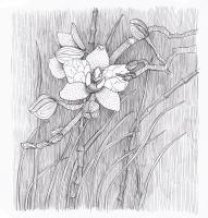 """Марианна Маслова. Из серии """"Мифы о цветах"""": Декабрь: Орхидея"""