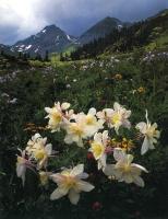 Дэвид Мюнх. Белые цветы