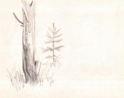 Arkady Pavlovich Laptev. Sketch of a tree