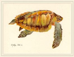 Джоселин Слек. Оливковая черепаха