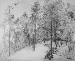 Alexander Victorovich Shevelyov. Forest in Pushkin mountains.Boom. The tonir.Graph. CT.59 x 74 cm 1988