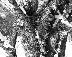 Stanislav Alexandrovich Tretyakov. Tree