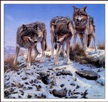 Джон Сирей Лестер. Волки