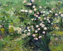 Винсент Ван Гог. Розовый куст в цвету