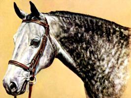 Дональд Шварц. Лошадь 10