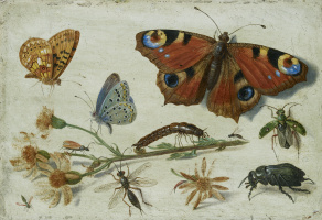 Jan van Kessel Elder. Three butterflies, a beetle and other insects, with a cutting of Ragwort