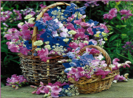 Саймон Кейн. Две корзины цветов