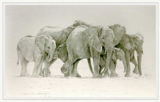 Дино Паравано. Прогулка слонов