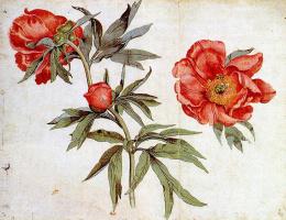 Мартин Шонгауэр. Красные цветы