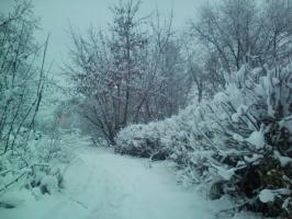 Евгения Балашова. Зима