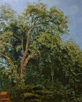 Александр Андреевич Иванов. Дерево в парке Киджи