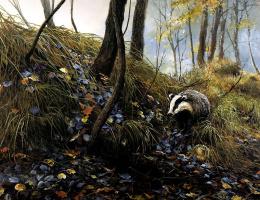 Питер Верстаппен. Природа 28
