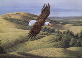 Терри Маклин. Белоголовый орлан