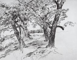 Иван Иванович Шишкин. Деревья