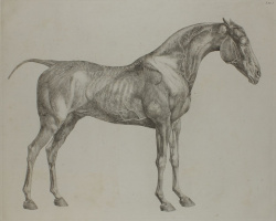 George Stubbs. The anatomy of the horse