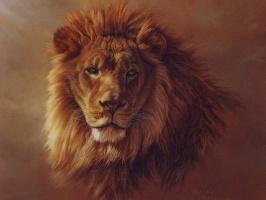 Калон Боган. Африканский лев 2
