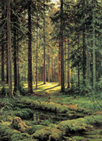 Ivan Ivanovich Shishkin. A coniferous forest. Sunny day