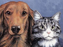 Джек Грабер. Собака и кот