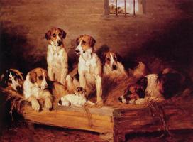 Джон Эммс. Собаки в питомнике