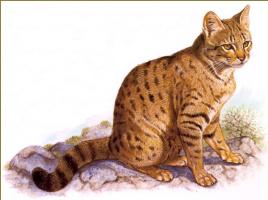 Роберт Даллет. Сардинская кошка