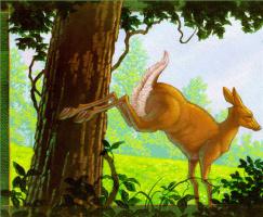 Кристофер Каньон. Жизнь леса