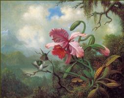 Мартин Джонсон Хед. Орхидея и колибри у озера