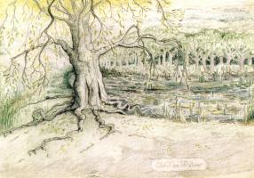 Джон Рональд Руэл Толкиен. Старое дерево