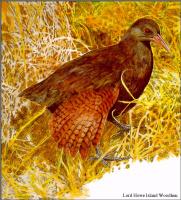 Тони Оливер. Австралийские вымирающие виды 09