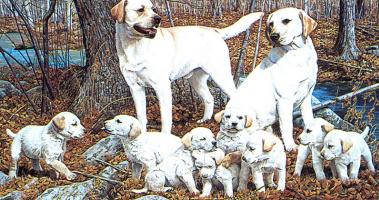 Норман Адамс. Собаки и щенки