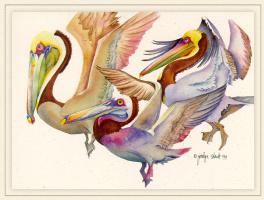 Джоселин Слек. Коричневые пеликаны