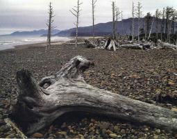 Элиот Портер. Лесной пейзаж 8