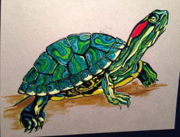 Евгения Брайд. Красноухая черепаха